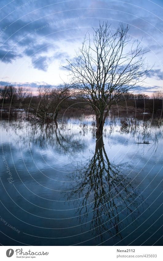 I'm a poor lonesome tree... Environment Nature Landscape Air Water Clouds Winter Climate change Bad weather Tree Meadow Field Forest Wet Blue Sadness Grief Cold