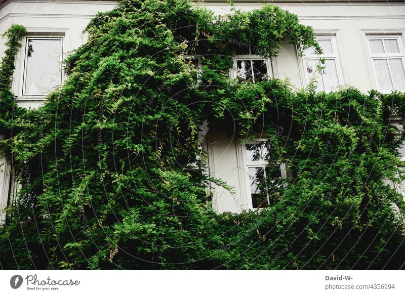 A house overgrown with plants House (Residential Structure) Facade Overgrown Green policy Ivy propagation Creeper Wall (building) Wall (barrier) wax Growth