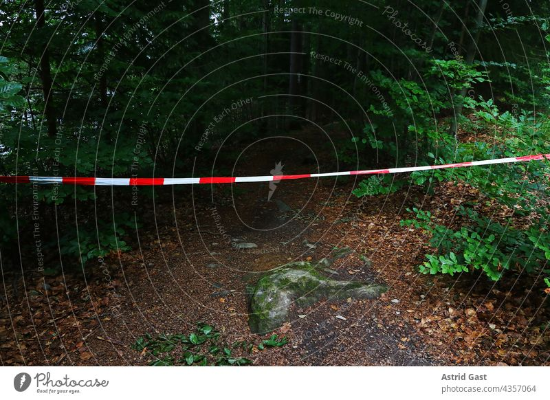 A forest path is blocked with a red and white barrier tape Forest off Barred Crime scene blocking peril Dangerous Band Reddish white forbidden No passage cordon