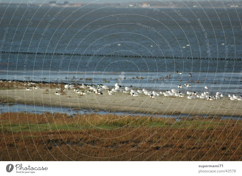 rest Ocean Calm seagulls Sand Water Sun