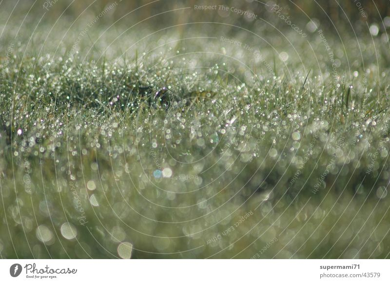 morning dew Grass Fresh Morning Drops of water Rope Sun