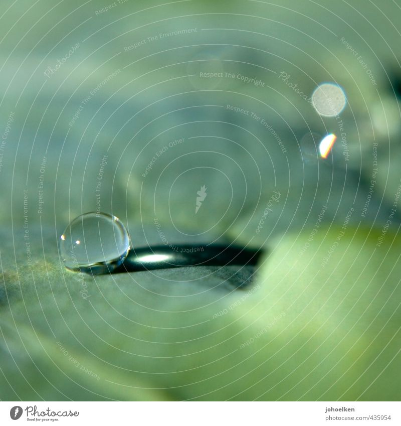 THE ROUND ONE MUST BE IN THE ANGULAR ONE Drops of water Sunlight Plant Leaf Glass Water Sphere Glittering Illuminate Lie Esthetic Fluid Gray Green Power Stress