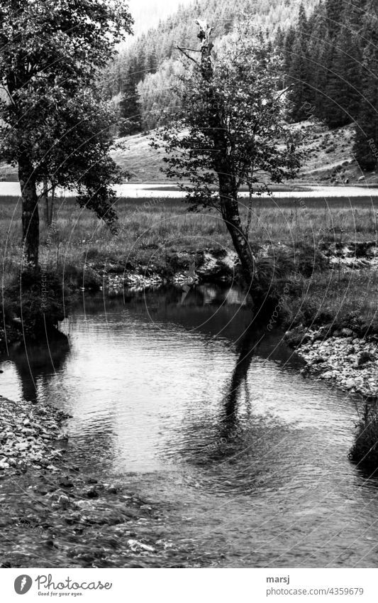 The reflection in the stream blurs the broken crown of the little tree. Brook Reflection in the water running waters Tree somber Water Nature
