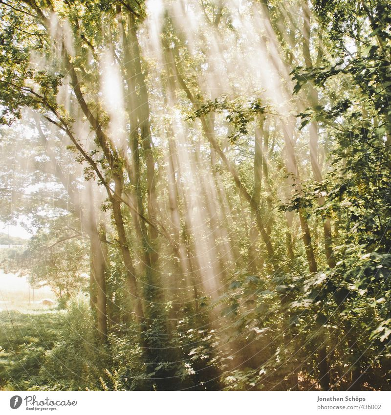 Nature Beautiful Green Plant Tree Landscape Forest Environment Travel photography Idyll Esthetic Hope Railroad tracks Rügen To break (something) Enchanting