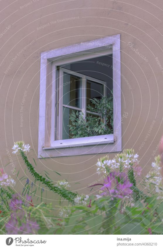 Windows, Plants / Flowers flowers Town City life Country life dwell Life Living or residing Facade House (Residential Structure) Architecture Building