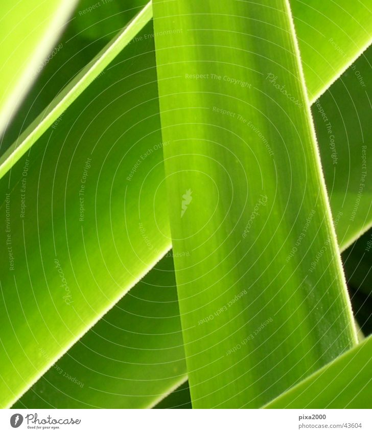 Green Plant Style Background picture Near