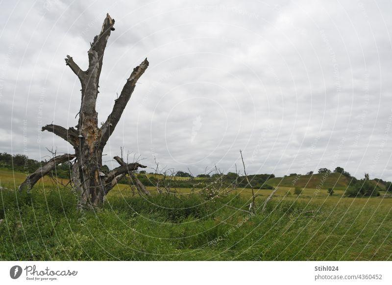 Tree torso in meadow landscape dead Torso Ruin Meadow Landscape floodplain Green aborted Fragment Environment Deserted Grass Sky Nature Clouds dreariness sad
