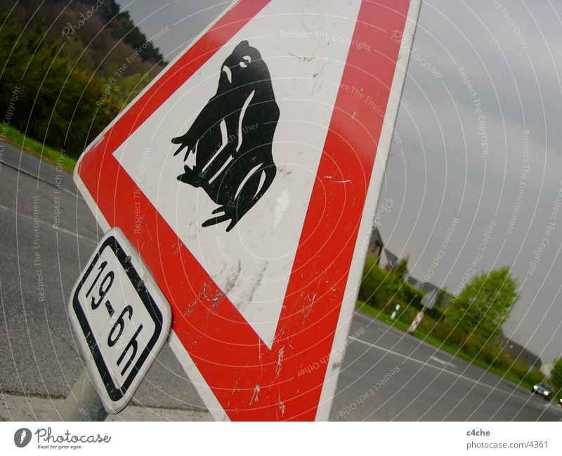 Street Car Signs and labeling Transport Frog Symbols and metaphors Photographic technology Reddish white