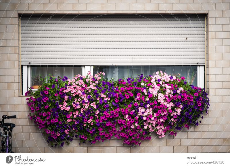 City Plant Summer Flower Leaf House (Residential Structure) Window Wall (building) Spring Wall (barrier) Architecture Building Blossom Garden Leisure and hobbies Flat (apartment)