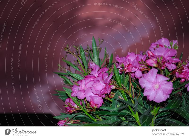 Thunder and lightning in front of the balcony Window box Storm clouds Flash photo Flower Plant Summer Nature evening mood Visual spectacle Bad weather Clouds