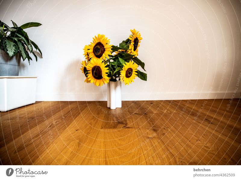 a bouquet full of sunshine Blossoming Yellow Contrast Colour photo Plant Summer Fragrance fragrant Spring beautifully blossom Flower luminescent Blossom leave