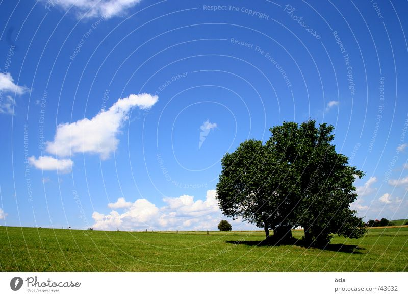 tree on blue-green Tree Clouds Grass Meadow Green Loneliness Sky Blue Vantage point Landscape