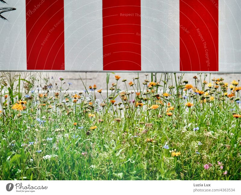Guardrail red and white, underneath it blooms Crash barrier Red White Transport Street blossoms flowers Summer Town variegated pretty Bright Summery Plant