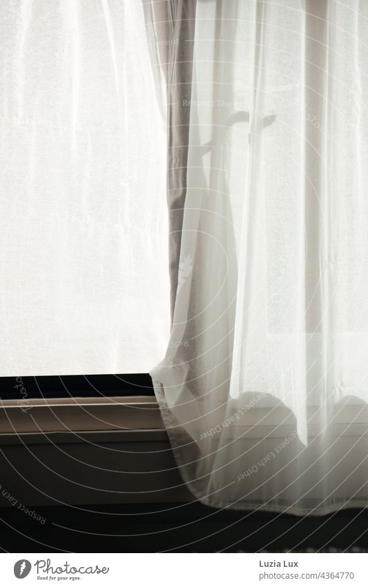 At the window... Curtains in the wind, shadow play Window at the window Drape drapes Light Shadow Cloth Living or residing Flat (apartment) White Bright
