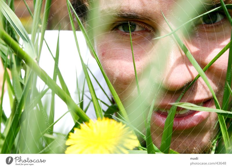look... Man Flower Grass Green Yellow Meadow Face Eyes Lawn Hair and hairstyles Lie Nature Laughter Looking