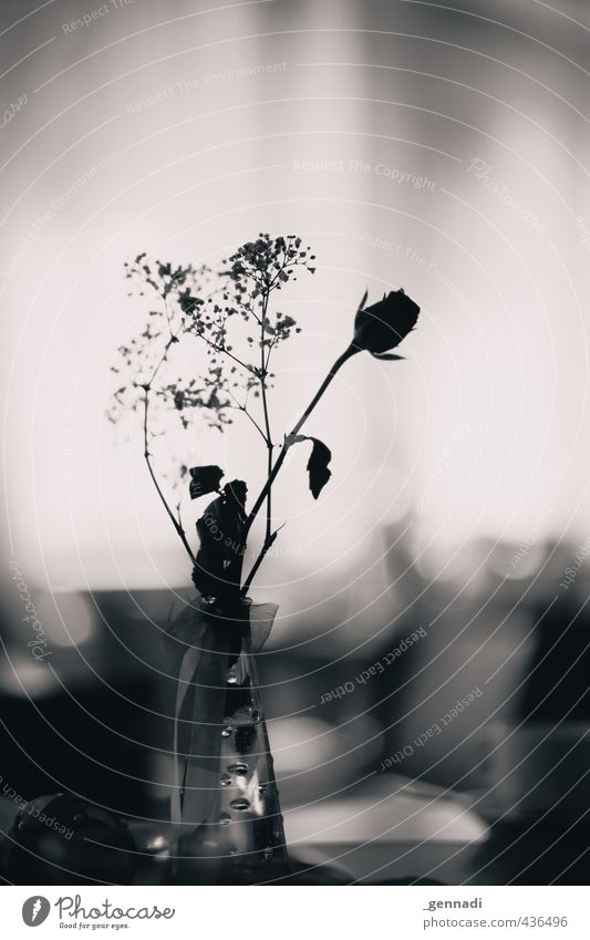 Roses are black and white Flower Decoration Vase Blur Table decoration Calm Jewellery Curlicue Wedding Registry Black & white photo Interior shot Deserted