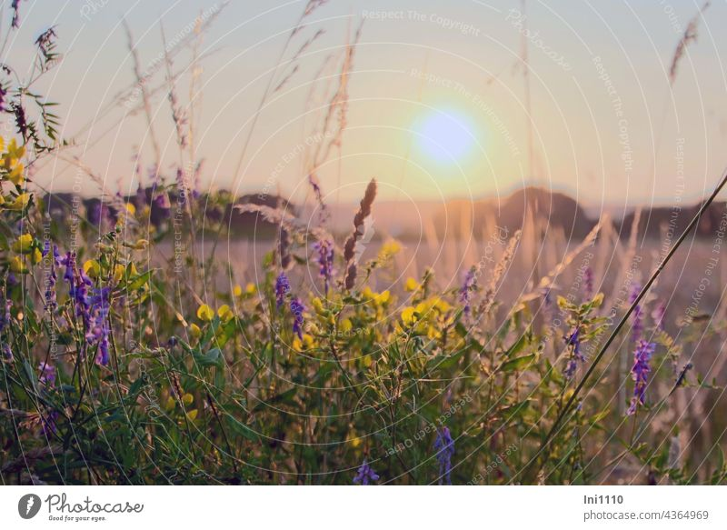 Sunset at the edge of the field Summer Summer evening evening light Romance evening mood Twilight Landscape fields evening stroll silent Light Shadow grasses
