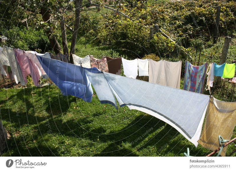 Clotheslines in the sunny garden clothesline Laundry Washing day Hang up Photos of everyday life Living or residing Clean Housekeeping Country life fresh air