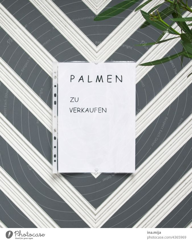 Sale: palm trees for sale palms Sell Offer sales sign Trade Plant trade Markets Shopping Signs and labeling Advertising Piece of paper Consumption