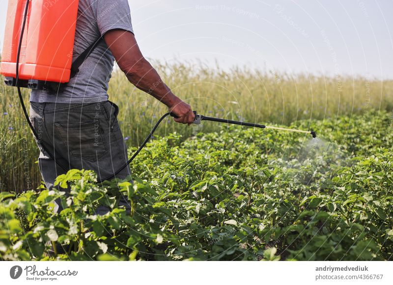 A farmer with a mist sprayer treats the potato plantation from pests and fungus infection. Use chemicals in agriculture. Agriculture and agribusiness. Harvest processing. Protection and care