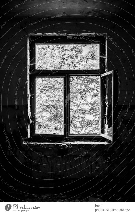 Lost Land Love   Dark inside and light outside Bright Contrast Rich in contrast High contrast Black White Black & white photo black-and-white Window Open open