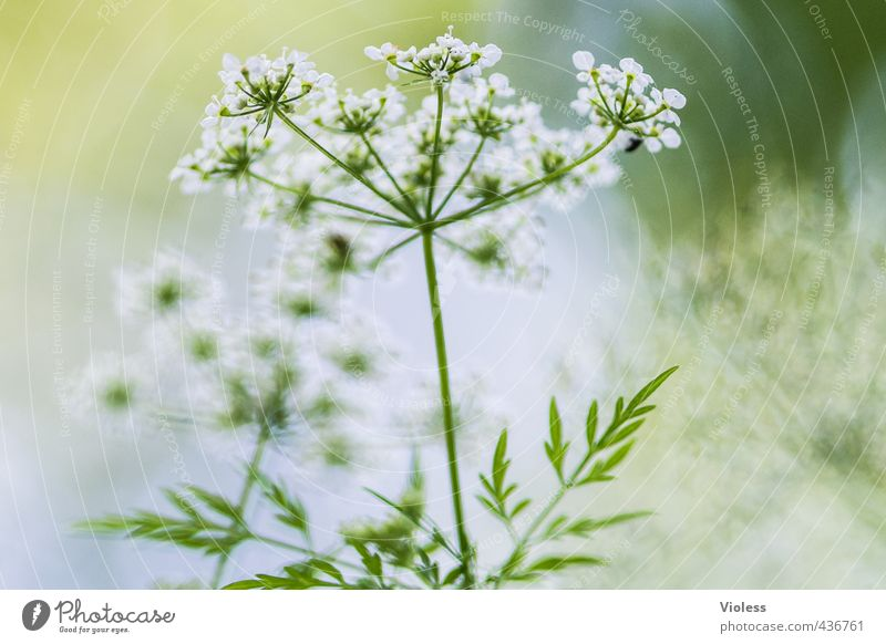 ...another world Environment Nature Plant Blossom Wild plant Meadow Blossoming Green Macro (Extreme close-up) Experimental Blur