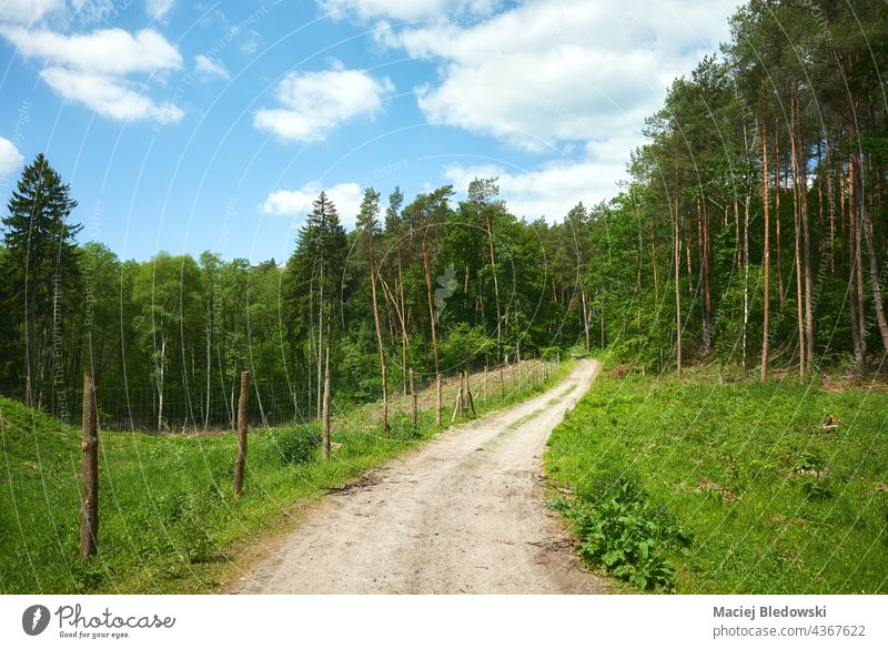 Road in a forest on a sunny summer day. road tree path panorama nature green environment landscape wood woodland horizontal poland fence sky dirt road hill