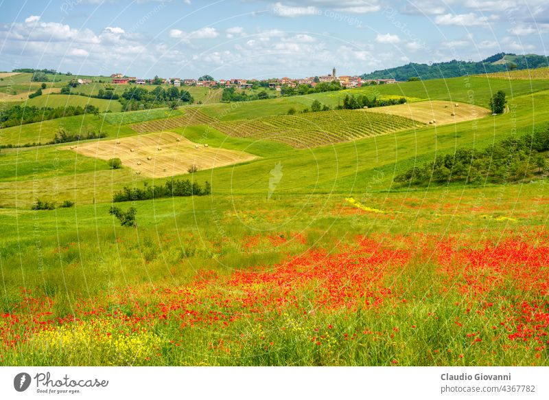 Landscape on the Tortona hills at springtime. Alessandria Cerreto Grue Colli Tortonesi Europe Italy Piedmont color day field green house landscape nature
