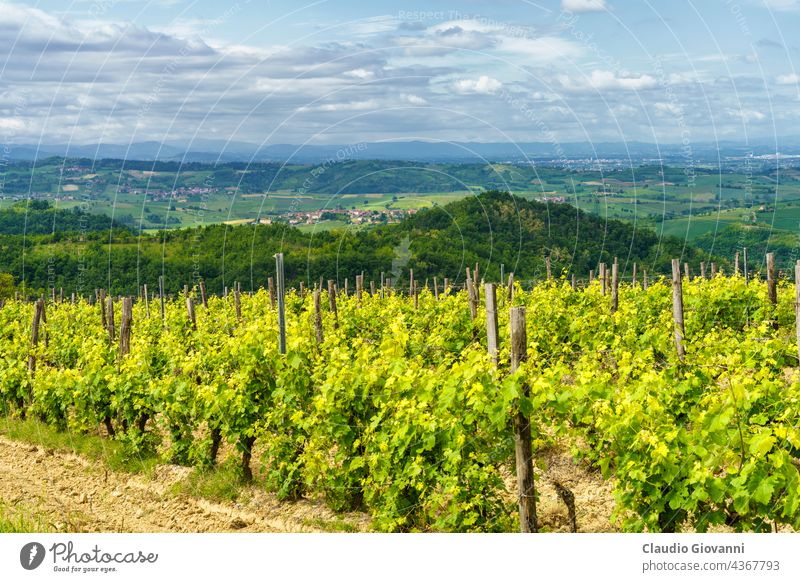 Vineyards on the Tortona hills at springtime Alessandria Colli Tortonesi Europe Italy Piedmont Volpedo color day field green house landscape nature outdoor