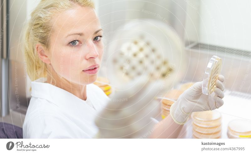 Scientist observing petri dish. Ebola agar analysis analyzing bacteria biotech biotechnology biotecnology clinic coat develop discover doctor drug equipment