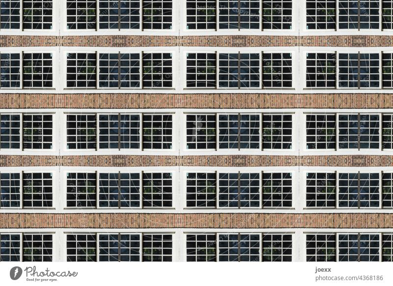 Window row on facade Facade Exterior shot Colour photo Wall (building) House (Residential Structure) Building Wall (barrier) Deserted Architecture Pattern