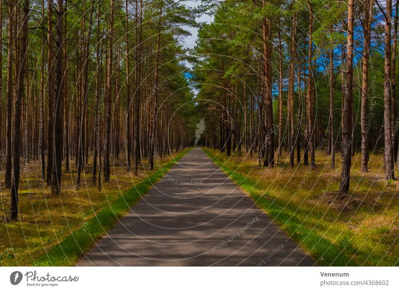 Bike path in a pine forest in summer in Germany off Light Shadow Tree trees Holiday season Afternoon cycle path Cycle path Cycling recreational sport Hiking