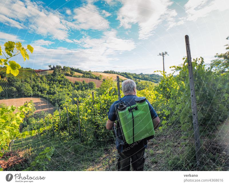 armer spraying fungicide to organic grape vines plants during summer before next harvest in the italian hills of Piacenza agriculture italy farmer outdoors