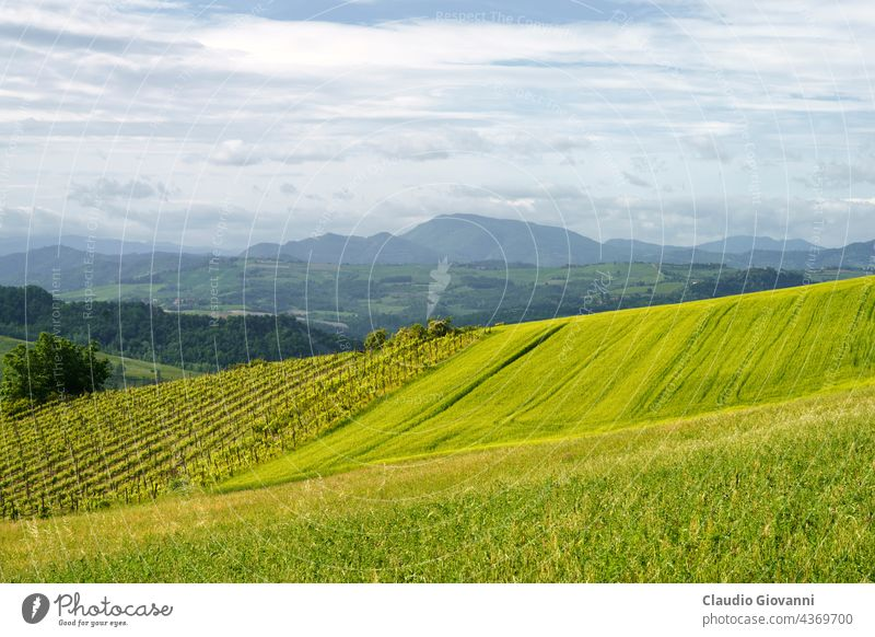 Vineyards on the Tortona hills at springtime Alessandria Colli Tortonesi Europe Italy Piedmont color day field green house landscape nature outdoor photography
