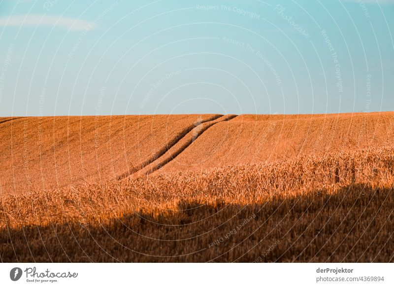 Field on a peninsula in Denmark Experiencing nature Joie de vivre (Vitality) Subdued colour Abstract Pattern Structures and shapes Copy Space left