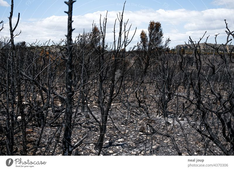 Charred trees and scrubland after forest fire Forest fire Nature Tree Fire Environment Exterior shot Deserted Landscape Blaze Burnt Gray Black Blue sky Wood Hot