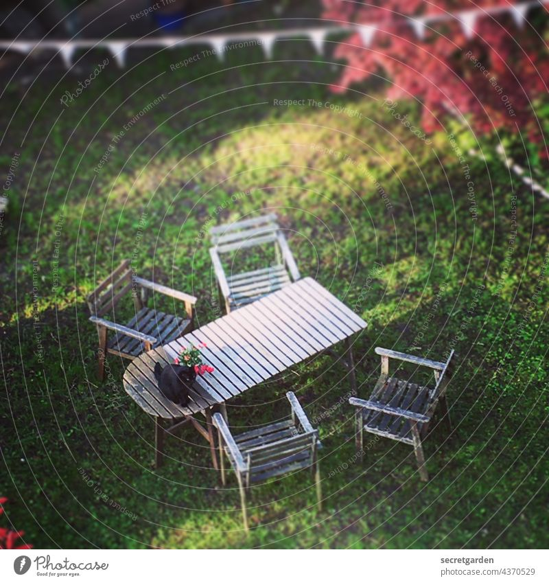 Seating in the evening light Cat Garden Outdoor furniture Lawn Grass Wood Autumn Table chairs Bird's-eye view Above Under garden idyll Cat lover Disobedient