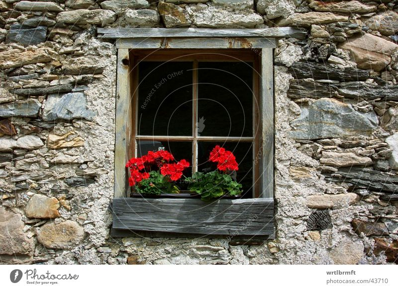 the window Flower Hut Wall (barrier) Wall (building) Window Stone Wood Old Red Window transom and mullion Chalet vacation Colour photo Exterior shot Detail Day