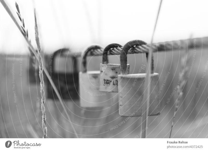 Love locks in the dunes Love Locks Love padlock Padlock Padlocks Wire cable grasses In love everlasting love corroded