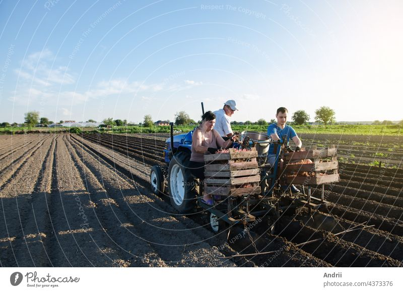 Workers are planting potatoes on the field. Automation of the process of planting potato seeds. Agricultural technologies. Agroindustry and agribusiness. New technological solutions to simplify work.