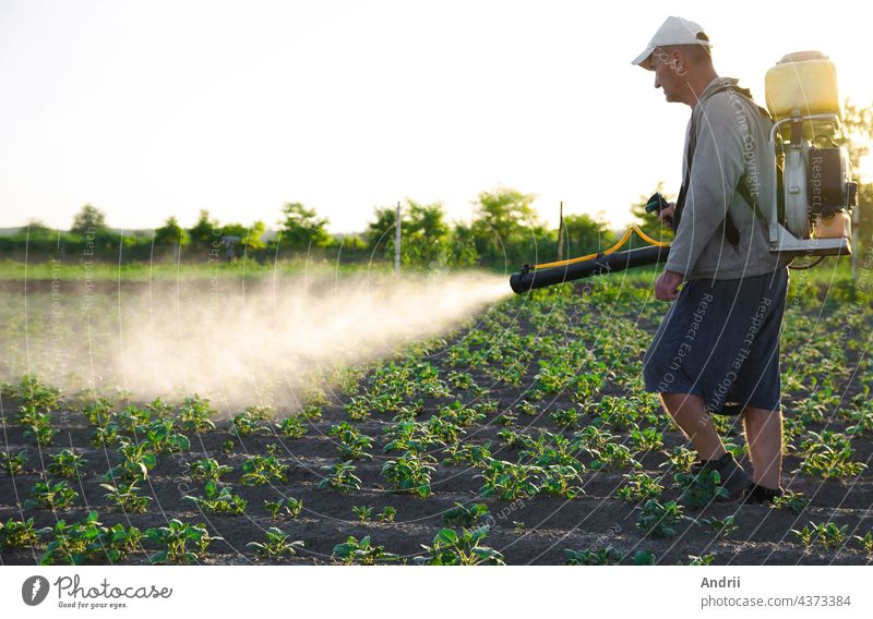 A farmer with a backpack spray treats the plantation with pesticides. Protection of plants from insects and fungal infections. Resistance of the crop to pests. Chemical industry in farming agriculture