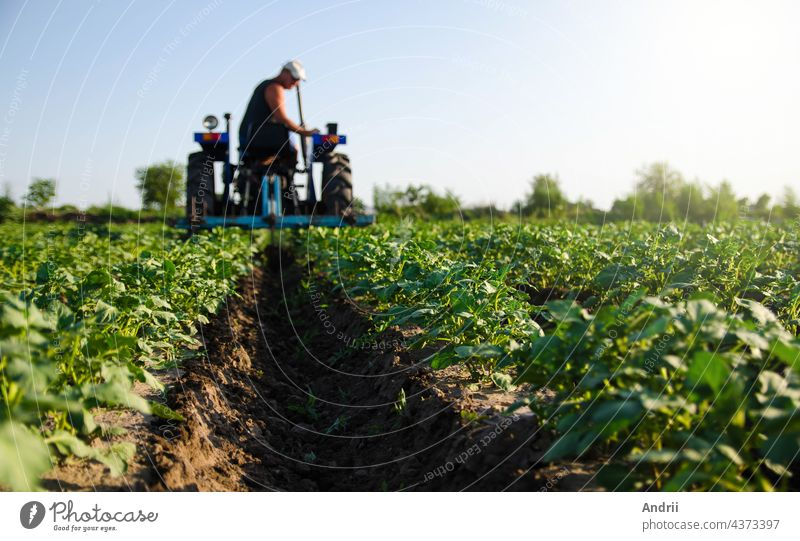 Potato plantation and tractor farmer cultivating rows. Agroindustry and agribusiness. Cultivation of a young potato field. Loosening of the soil between the rows of bushes. Blurry