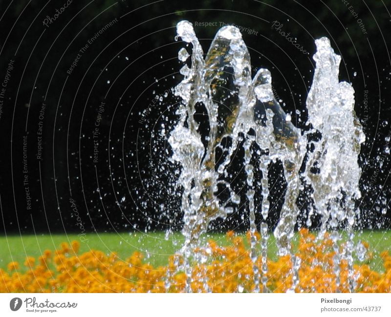 water ballet Summer Refreshment Fountain dancing water