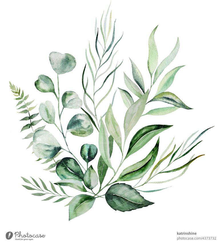 Watercolor botanical green leaves bouquet illustration Botanical Decoration Drawing Element Foliage Garden Hand drawn Isolated Ornament Paint Plant Set Summer