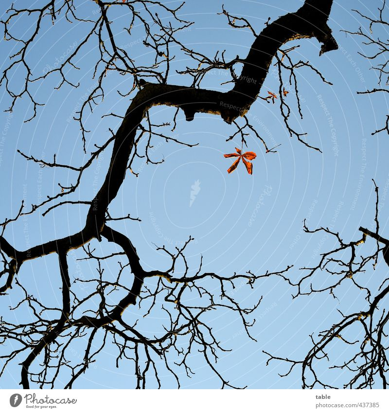 Sky Nature Blue Old Plant Tree Loneliness Calm Leaf Environment Autumn Wood Weather Orange Beautiful weather Individual