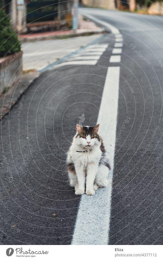 A cat on the street Cat Street out freigänger Pet Animal Animal portrait Pelt hangover sedentary