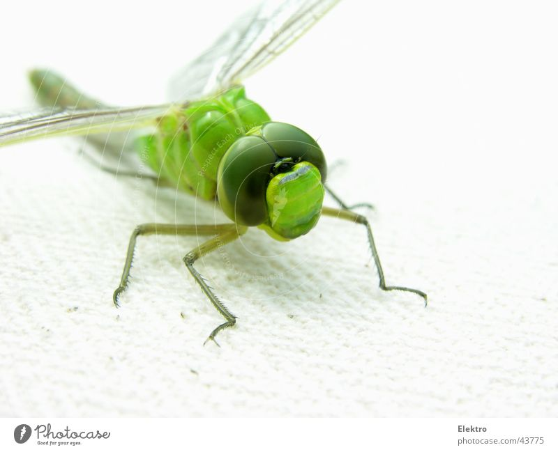 Green Summer Eyes Eyes Meadow Garden Grass Lake Wing Insect Pond Brook Spider Thief Horticulture Dragonfly