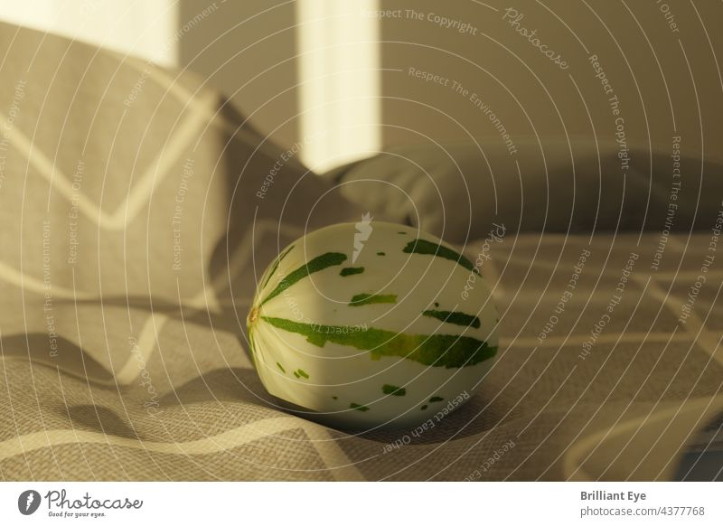 lying Snowball Melon on a blanket in the morning sunlight Healthy Eating Arrangement vegetarian nobody Component Nutrition freshness complete Fruit Yellow