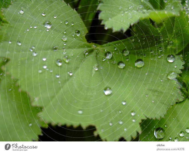 DropOnSheet Leaf Drops of water Hair and hairstyles Rain Water