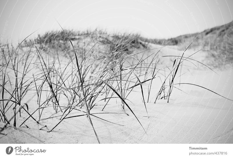 Nature Vacation & Travel White Calm Black Environment Emotions Gray Sand Growth Esthetic Hill Tracks North Sea Dune Blade of grass